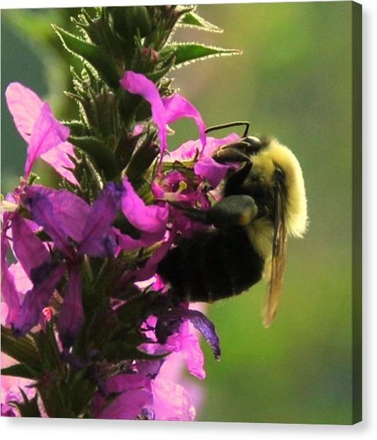 Nectar Time Canvas Print