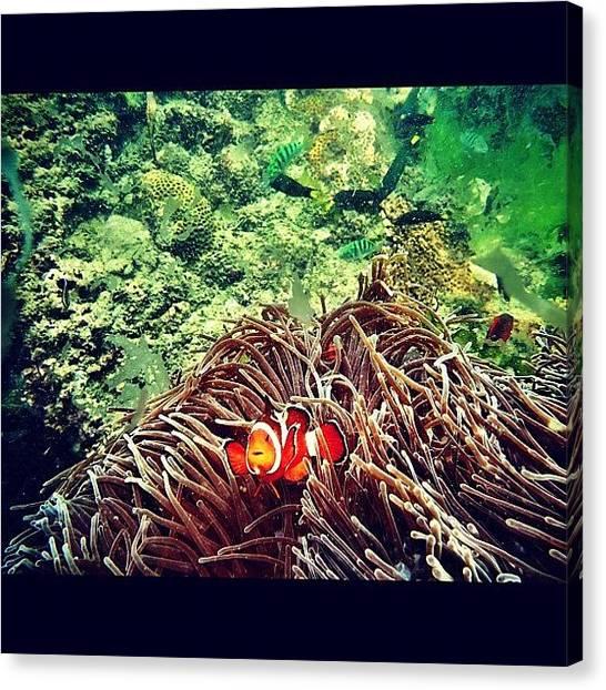 Underwater Canvas Print - Nemobali #gf_daily_aqua_011 by Hanafi Ali