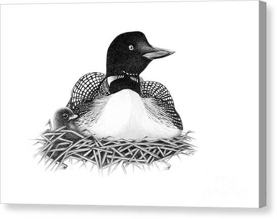 nesting loon drawing by bryan knudsen