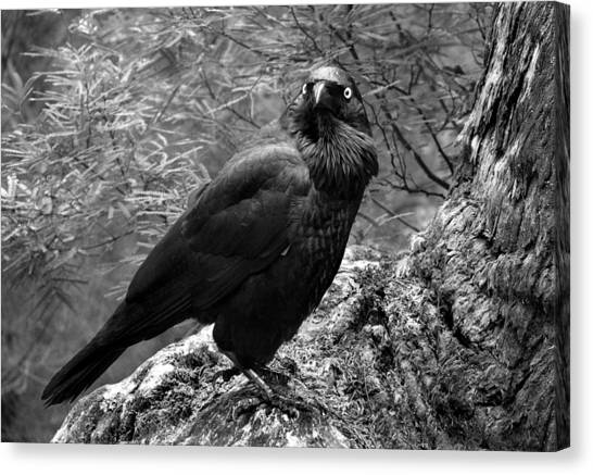Nevermore - Black And White Canvas Print