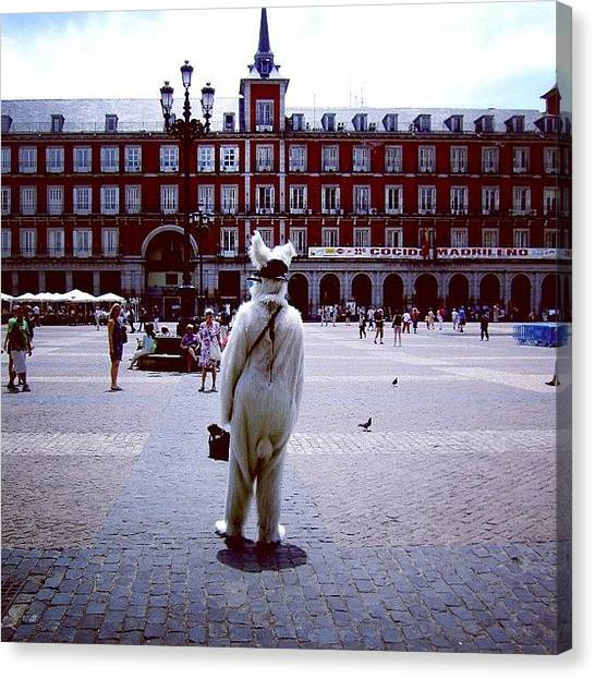 Rabbits Canvas Print - New In Town by Carlos Macia Perez