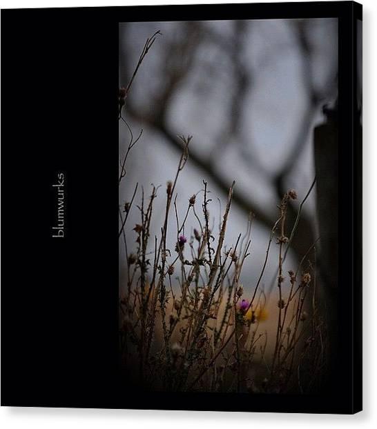 Tagstagram Canvas Print - New Life by Matthew Blum