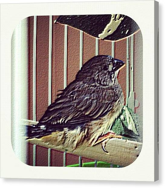 Finches Canvas Print - #new To This #world #baby #bird #birdie by Lori Lynn Gager