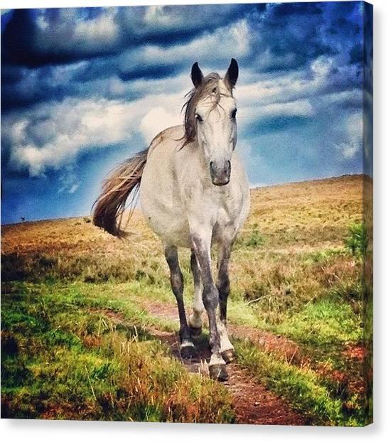 Ponies Canvas Print - #newforest #pony #horse #wildpony by Nikki Sheppard