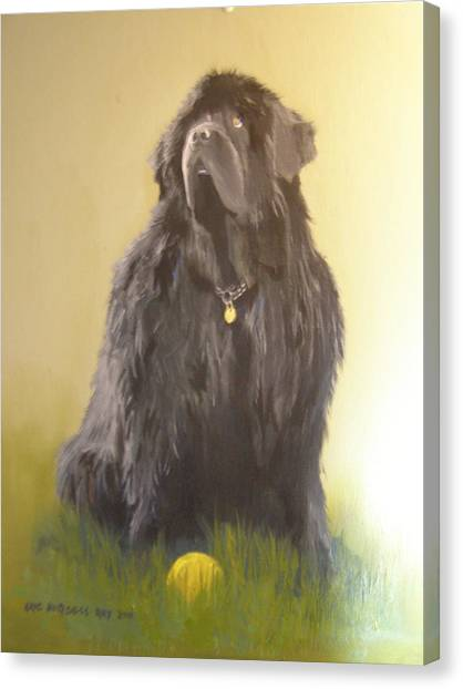 Newfoundland With Ball Canvas Print