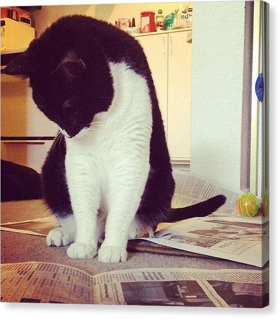 Tuxedo Canvas Print - Newsie by Momo and Little Cat