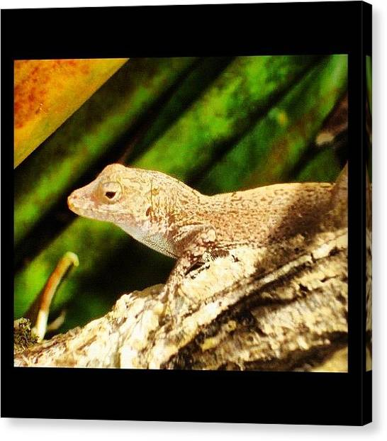 Lizards Canvas Print - Nice Lizard! by Luis Alberto