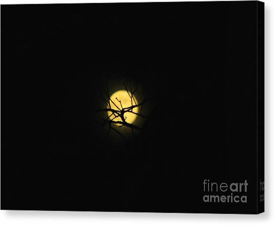 Night Sky In The Woods Canvas Print by Monica Poole