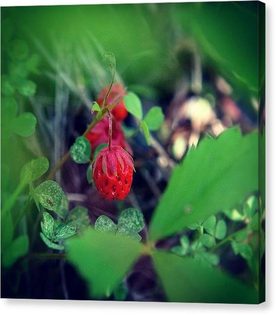 Strawberries Canvas Print - #nikon #dslr #detail #depth #popular by Loghan Call