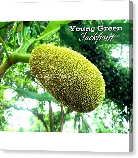 Fruit Trees Canvas Print - . . I Found This Young Green by Chez Edejer