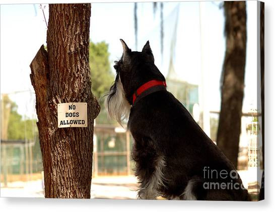 No Dogs Allowed Canvas Print