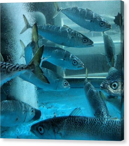 Aquariums Canvas Print - #no Not #visiting An #aquarium Still In by Kevin Zoller