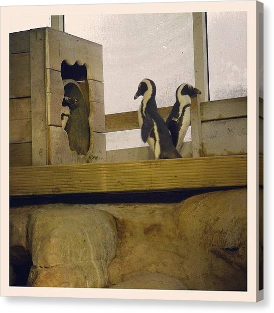 Penguins Canvas Print - 'no Way Am I Letting You In' Haha by Paul Taylor