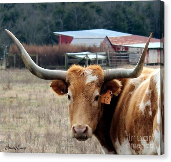 No.13 Longhorn Canvas Print by Lorraine Louwerse