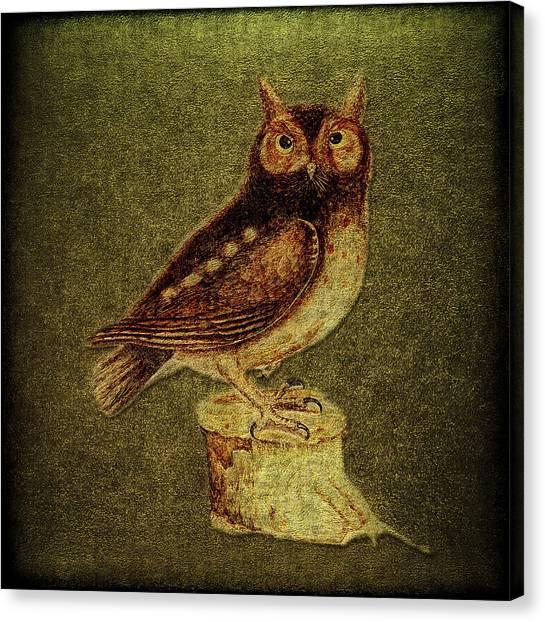 Noctua Aurita Minor Canvas Print by Li   van Saathoff
