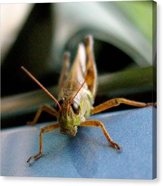 Grasshoppers Canvas Print - #nofilter #colors #brightcolors #bright by Elissa Q