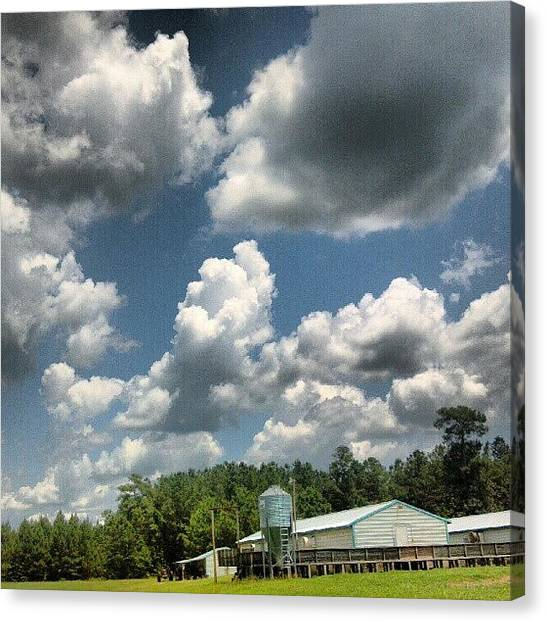 Hogs Canvas Print - #nofilter by Daniel Bostic