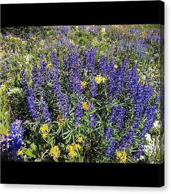 Tetons Canvas Print - #nofilter #flowers #hiking #tetons by Niels Rasmussen