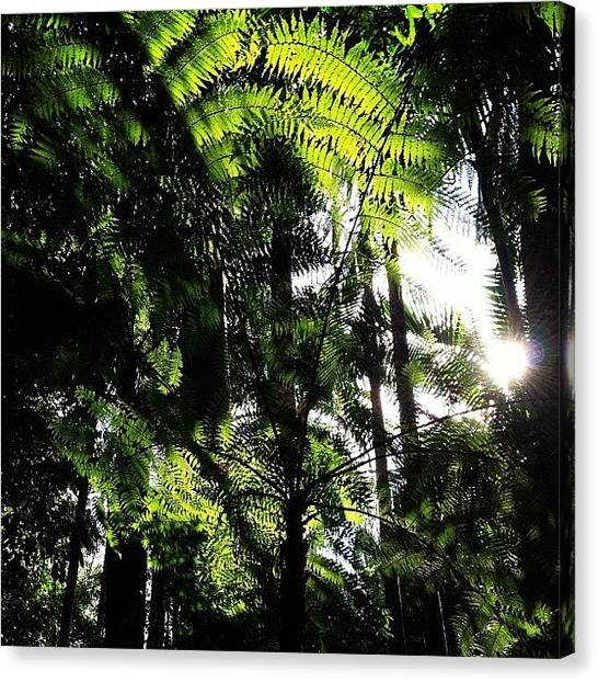 Rainforests Canvas Print - #nofilter #mtcougal by Tony Keim