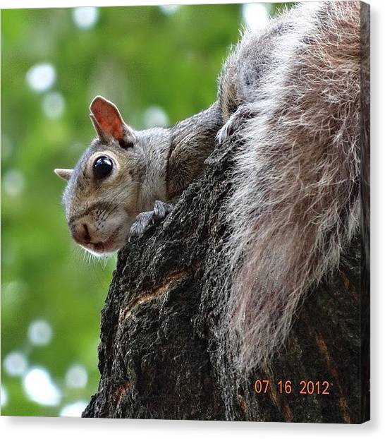 Squirrels Canvas Print - #nofilter #original #sonycamera by Zyrus Zarate