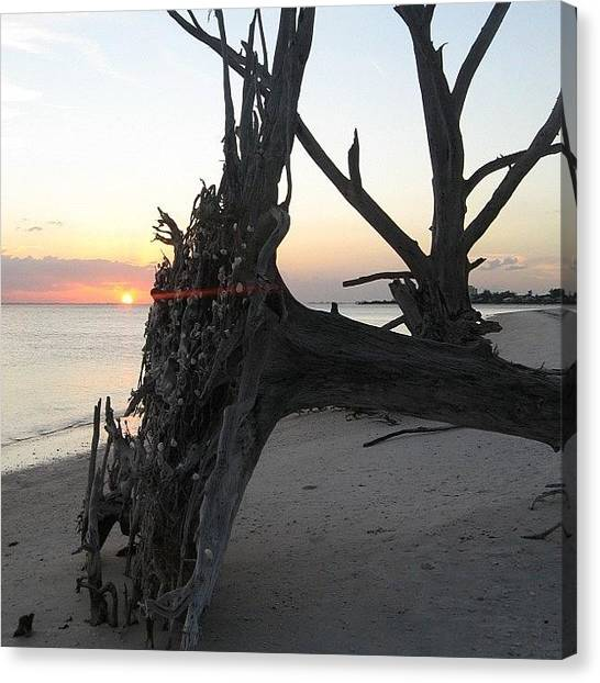 Seashells Canvas Print - #nofilter #sunset #beach #tree by Vickie ODell