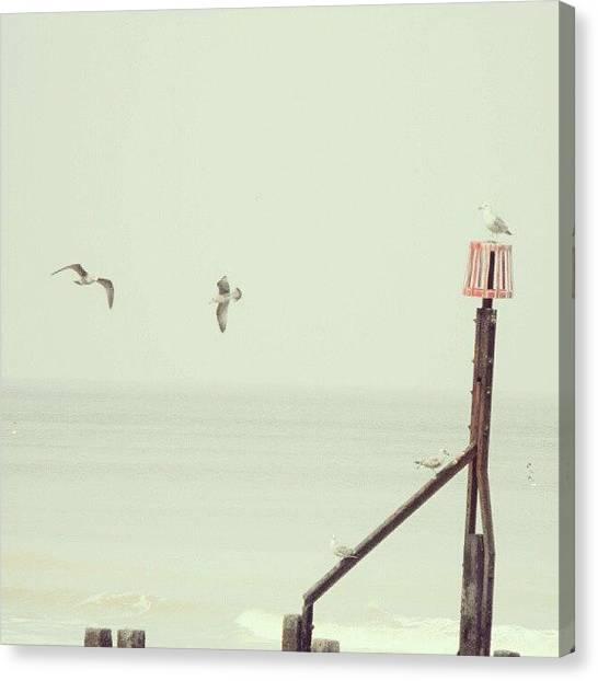 Groin Canvas Print - #norfolk #seagulls... #latergram #birds by Alexandra Cook