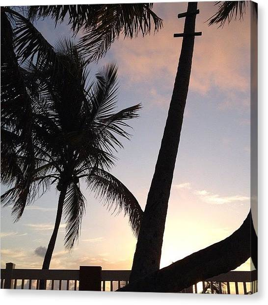 Beach Sunrises Canvas Print - Normal. #sun #sunrise #palms #goodvibes by Edda Garcia