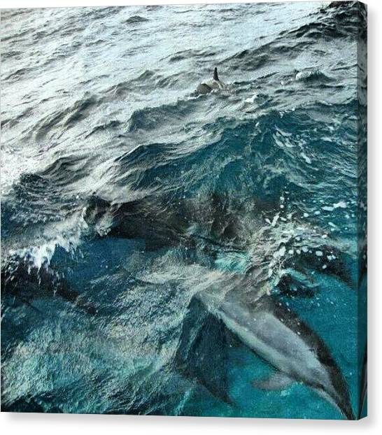 Dolphins Canvas Print - #noronha #fernandodenoronha by Augusto Costa