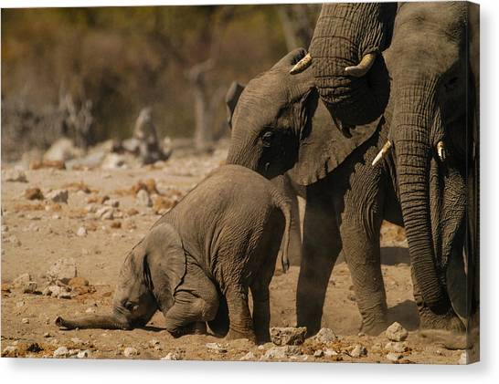 Nose Bump Canvas Print
