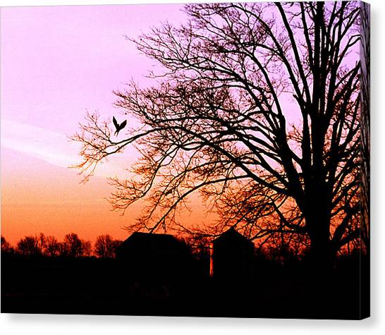 November Hawk Canvas Print