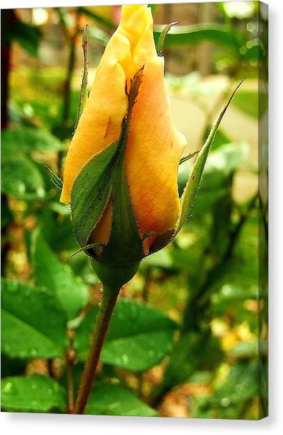 November Rose Canvas Print