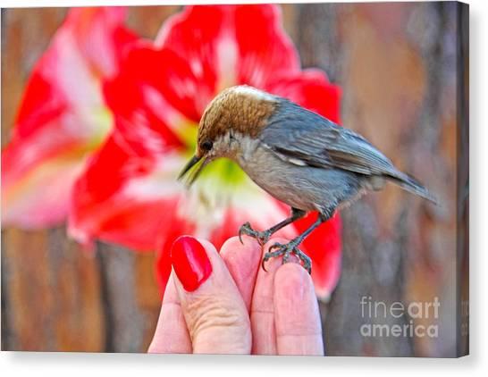 Nuthatch Bird Friend Canvas Print