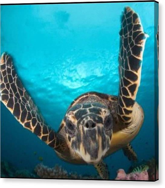 Sea Turtles Canvas Print - #oahu #ocean #waikiki #sand #sky by Andy Walters