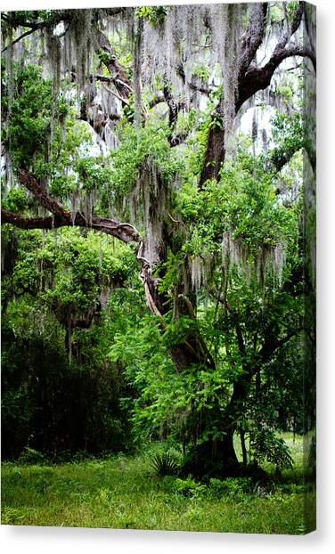 Oak And Moss Canvas Print