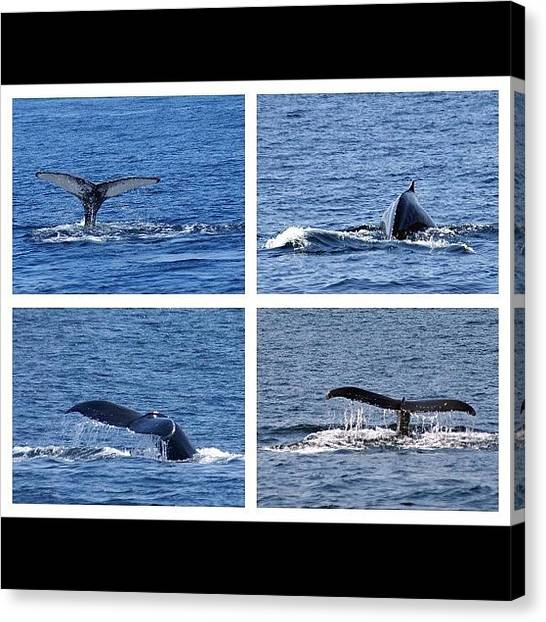 Whales Canvas Print - #ocean #humpback #whale #atlantic by Tom Gari Gallery-Three-Photography