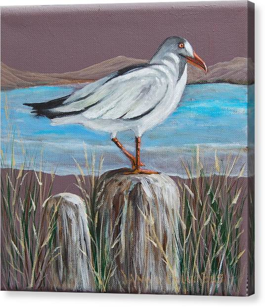 Ocean Sea Gull Canvas Print by Janna Columbus