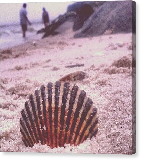 Seashells Canvas Print - #ocean #shell #seashell #beach #shore by Briana Ramirez