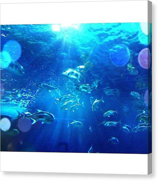 Owls Canvas Print - Ocean World by Owl Town