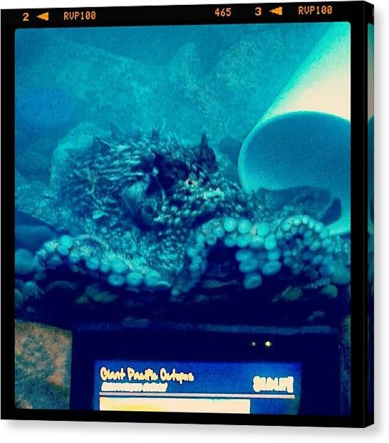 Octopus Canvas Print - #octopus #aquarium #instadroid by Kel Hill