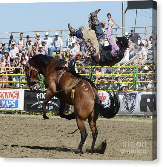 Bareback Canvas Print - Rodeo Off In A Flash by Bob Christopher