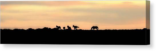 Off Into The Sunset Canvas Print by Donna Duckworth