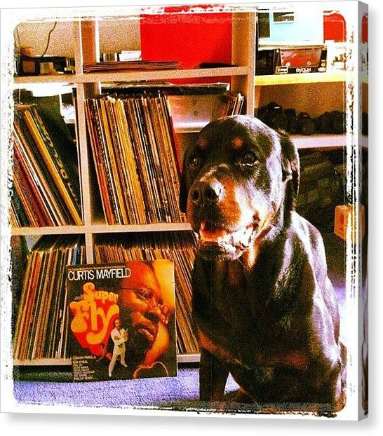 Rottweilers Canvas Print - Og Dogg by Tim Topping