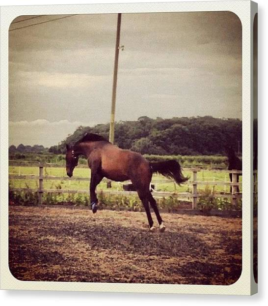 Thoroughbreds Canvas Print - Oh Dear.... Having Abit To Much Fun:l by Caitlin Hay