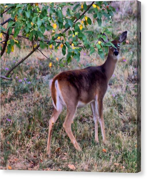 Oh Deer Me Canvas Print by Myrna Migala