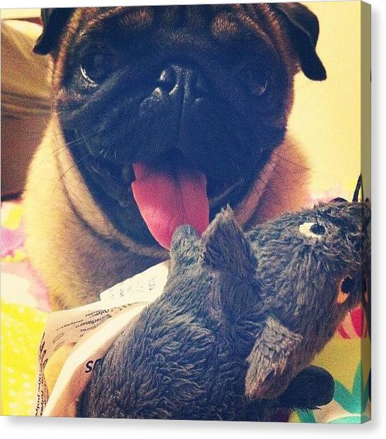 Pugs Canvas Print - Oh My Boy Pecu Like The Rat A Lot !!! by Zachary Voo