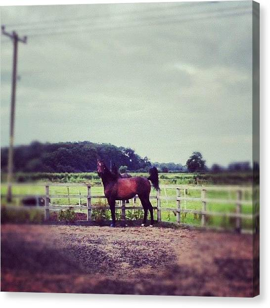 Thoroughbreds Canvas Print - Oh Swift You Really Are A Typical Tb! by Caitlin Hay