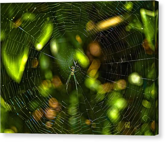 Oh The Web We Weave Canvas Print