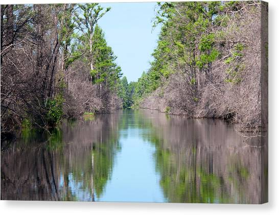Okefenokee Canvas Print - Okefenokee Beauty by Kenneth Albin