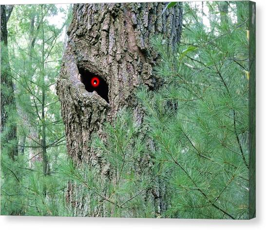 Old Man Tree Canvas Print by Dave Dresser