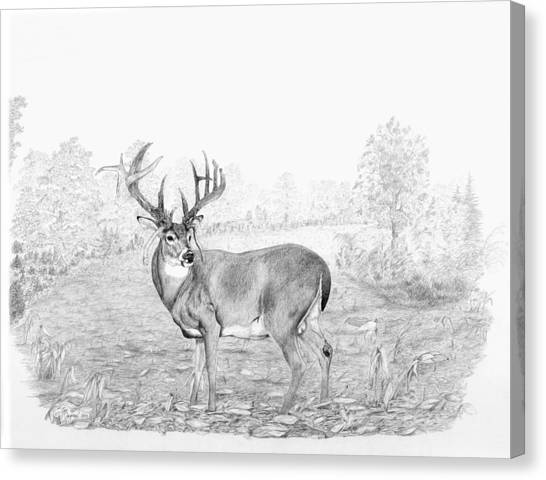 Steve Austin Canvas Print - Old Mossy Horns by Steve Maynard